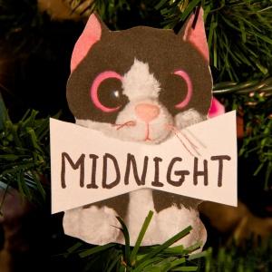Midnight Mitchelmore