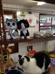 Earl Grey and Tuxedo Stan Minions visiting with one of the Cat Boat residents.