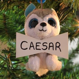 Caesar Herd