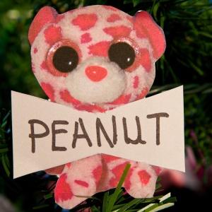 Peanut Hayman