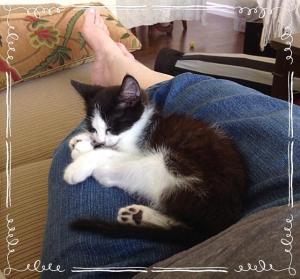 Sleeping on a nice warm lap. Zzzzz...