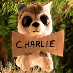 Charlie Moulton