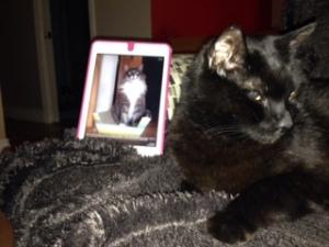 Catherine's cat
