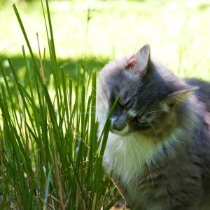 EG grass