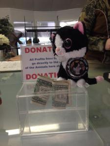 Minon Tuxedo Daisy Mae in Mead, Washington at Cat Tales donation jar