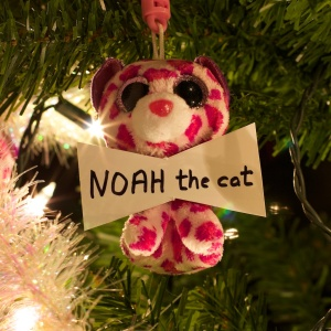 Noahthecat