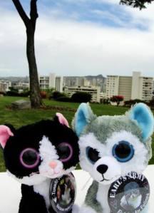 Tuxedo Jasmine Pearl and Tuxedo Harry Aloysius at Diamond Head, Hawaii