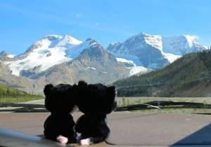 Approaching the Columbia Icefield!