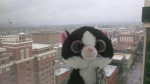 Tuxedo Daisy Mae at the Davenport Tower in Spokane, WA