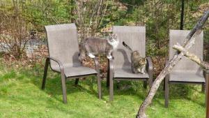 Earl Grey and Louise have finished setting up the lawn chairs.