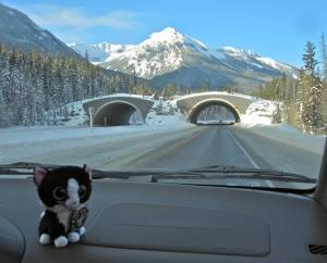 Wildlife overpasses in Banff National Park
