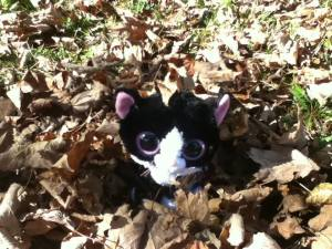 Tuxedo Paula Rose would like to wish Happy Thanksgiving From Maplewood, NB