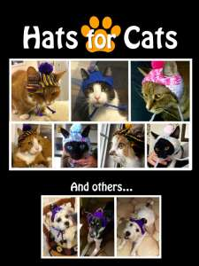 hats-for-cats-1