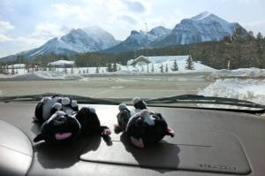 Bowled over by the stunning scenery near Lake Louise! Alberta, Canada
