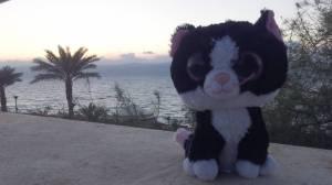 Enjoying a little sun at the Dead Sea