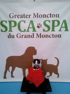 Moncton, NB SPCA